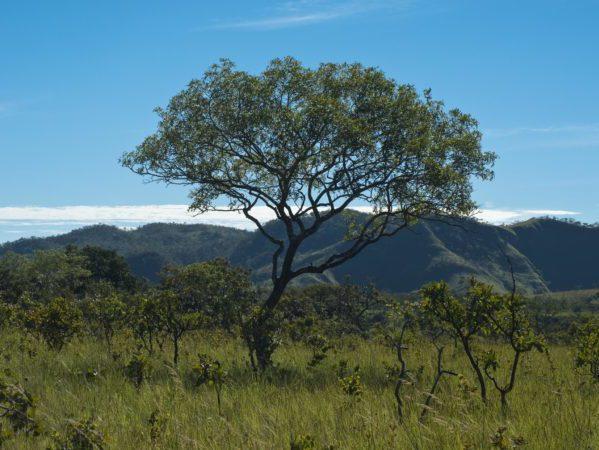 Reserva Natural Serra do Tombador, Fundacao O Boticario de Protecao a Natureza, Cavalcante, Goias, Brasil, foto de Ze Paiva, Vista Imagens.